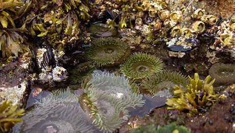 Tidal Pools Alaska Cruise