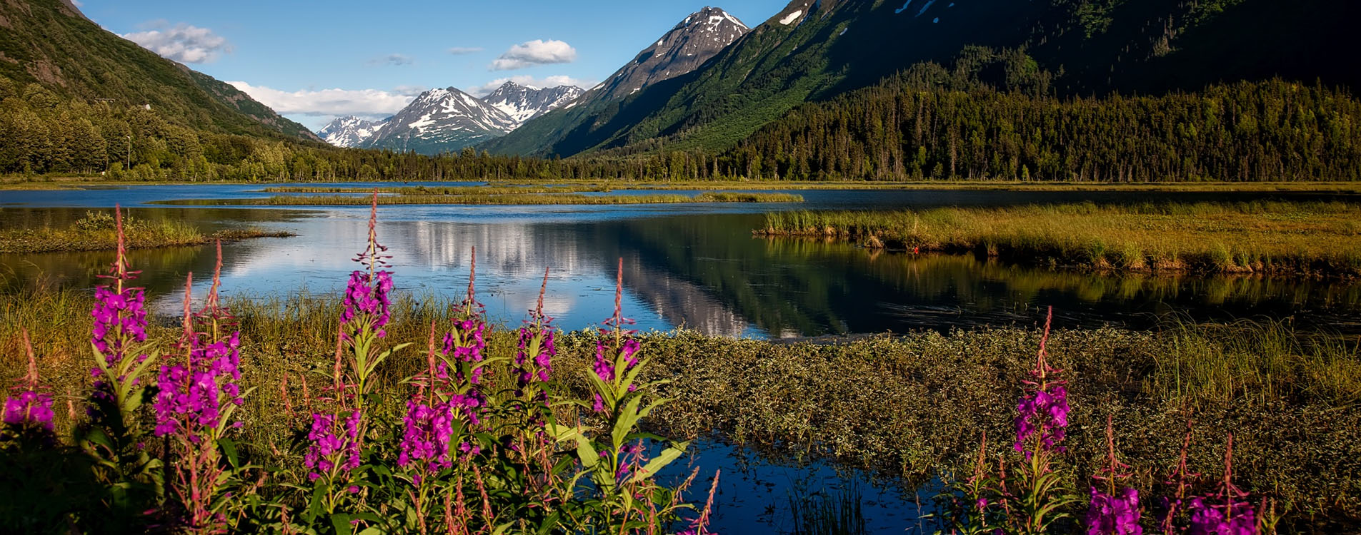 Alaska Cruise Plantlife Excursions