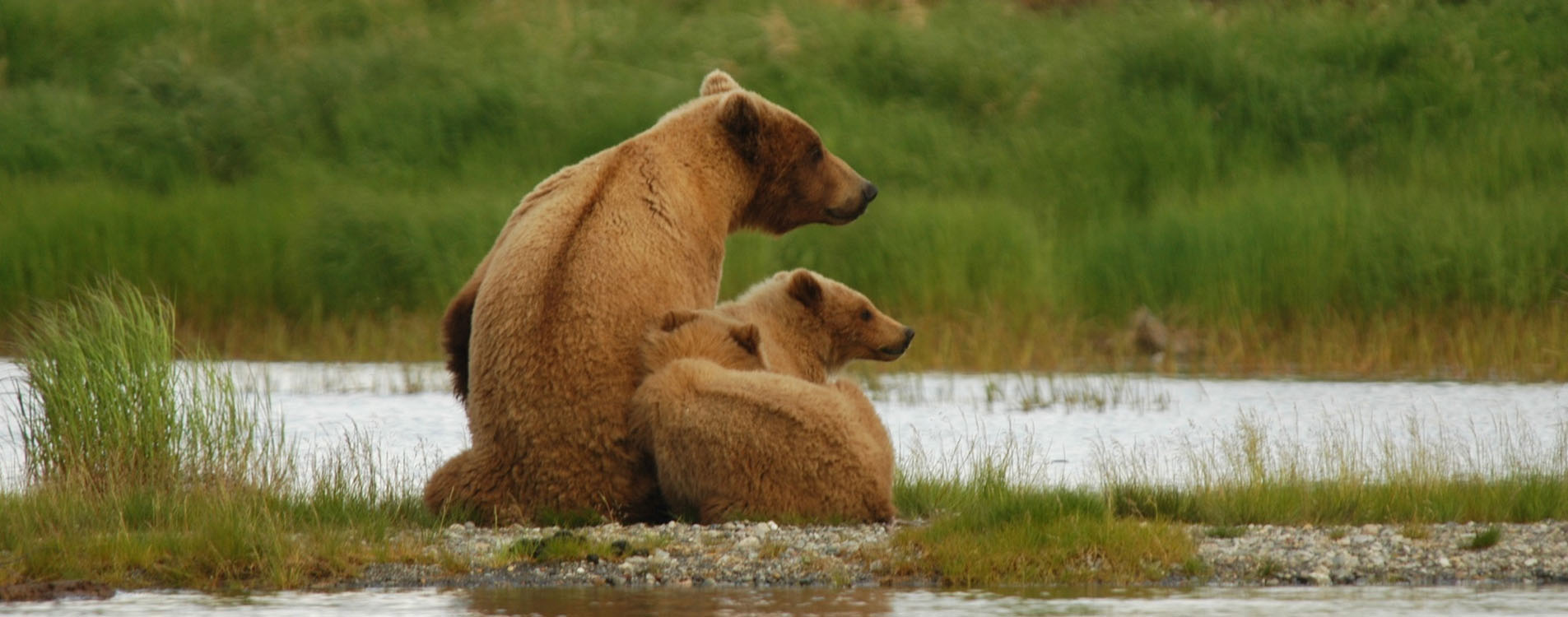 Alaska Cruise Wildlife Viewing Excursions