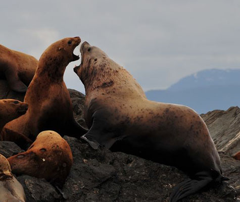 Alaska Inside Passage Sea Lion Excursions