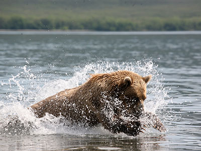 Alaska Cruise Bear Excursions