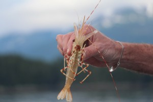 Alaska Cruising Shrimping And Crabbing Excursion