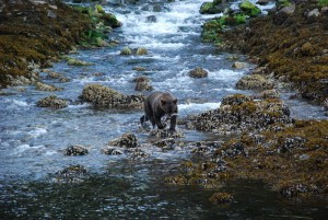 alaska cruise wildlife excursions