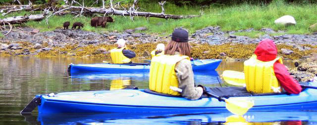 Alaska Cruise Kayaking Wildlife Viewing