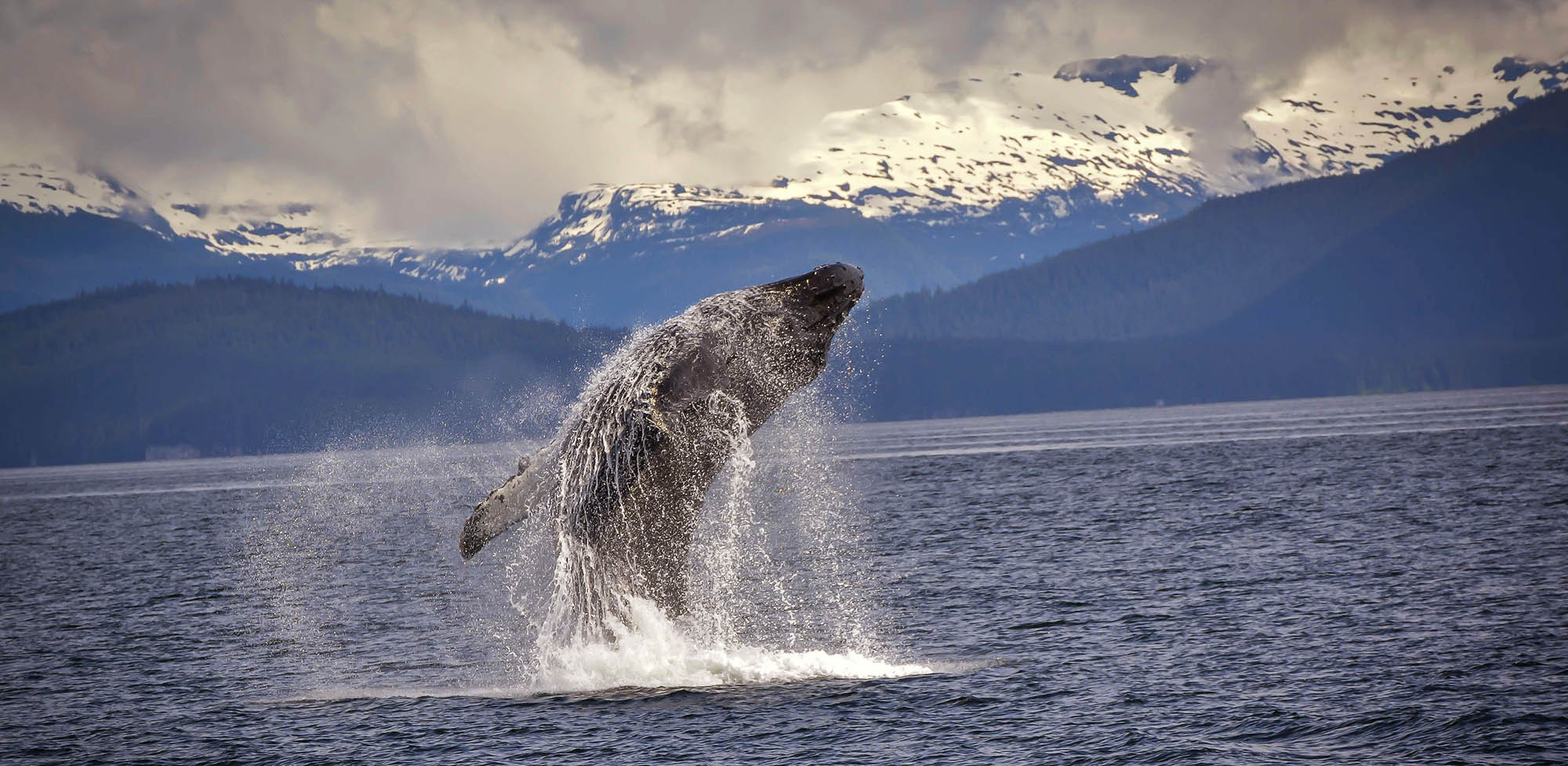 Alaska Whale Watching Alaska Cruise
